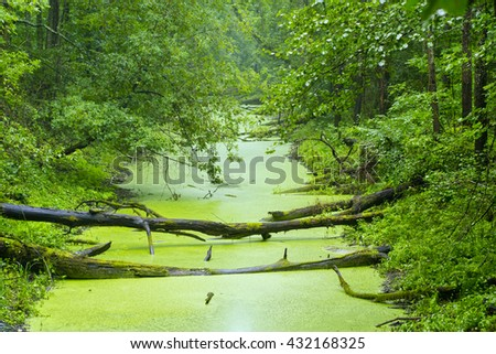 Swamp with trunks fallen in the water - stock photo