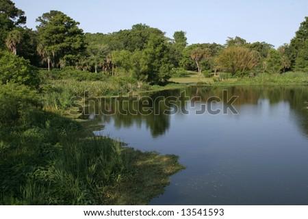 Swampland at Avery Island Louisiana - stock photo