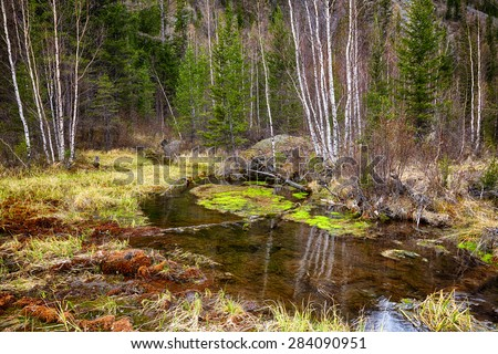 Swampy mossy stream in Altay Taiga - stock photo