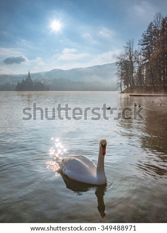 Swan and ducks at lake Bled in Slovenia