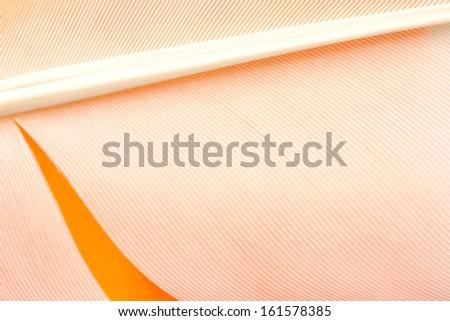 Swan feather texture background on orange paper - stock photo