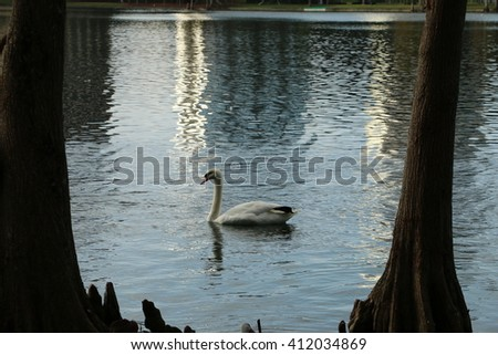 swan floating on the river/swan and river/Please visit my portfolio for more photos like this! - stock photo