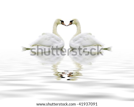 Swan heart montage - stock photo