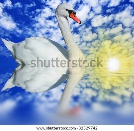 swan in a lake - stock photo