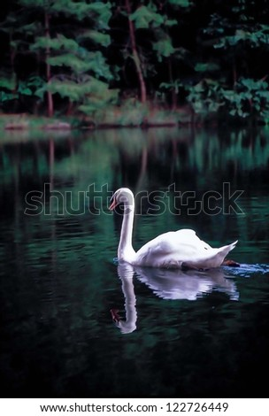 swan in lake - stock photo