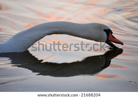swan neck - stock photo