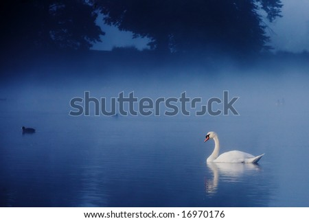 swan on tranquil misty lake - stock photo