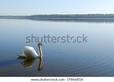 Swan on water - stock photo