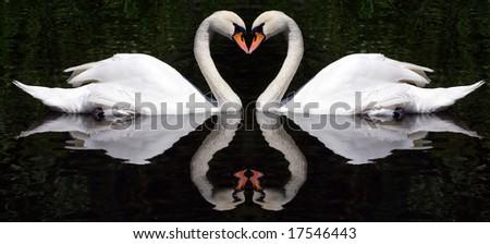 Swan's Hearts - stock photo