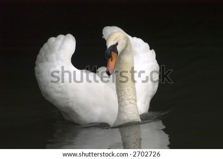swan swimming in the tunnel