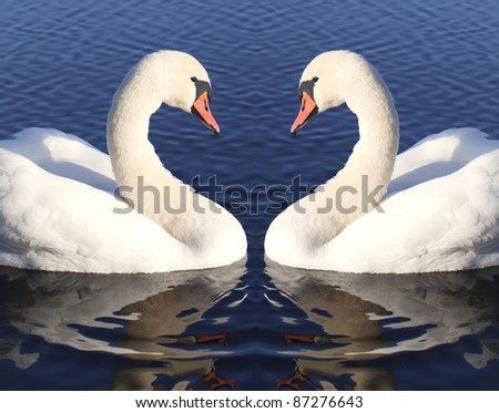 Swans. - stock photo