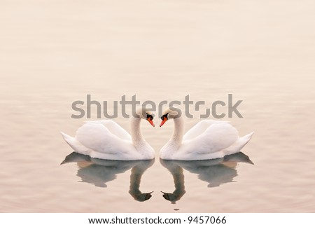 Swans Heart in the Calm Morning Lake