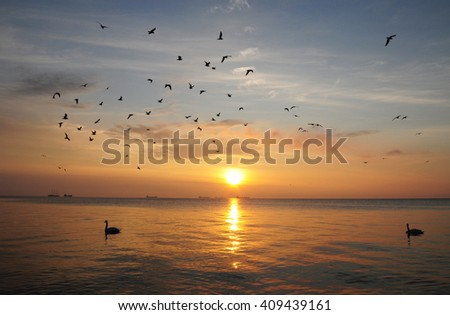 Swans in the Baltic sea during sunrise in Poland