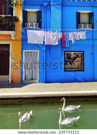 Swans in the water in front of brightly colored facade. Burano island, Venice. Colorful houses island and landmark of Veneto region, Italy - stock photo