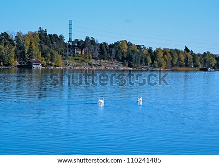 Swans on an autumn pond in the suburb of Helsinki - stock photo