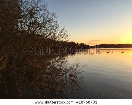 Swans on the Loch at dusk