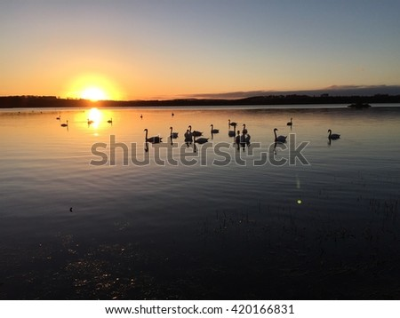 Swans on the loch at sunset