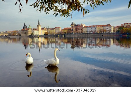Swans on the river Vltava in Prague, capital city of Czech republic, near by Charles bridge - stock photo