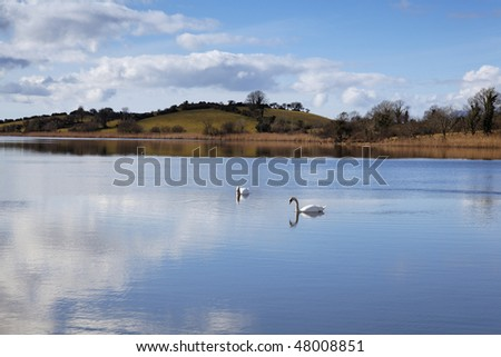 swans swim peacefully in sheltered area of Bantry Bay, near Bantry Town, Southern Ireland - stock photo