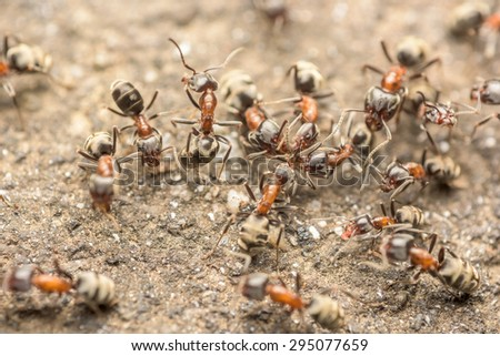 Swarm Of Ants Fights For Food Macro Close Up - stock photo