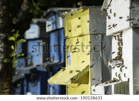 Swarm of bees fly to beehive. Sun light - stock photo