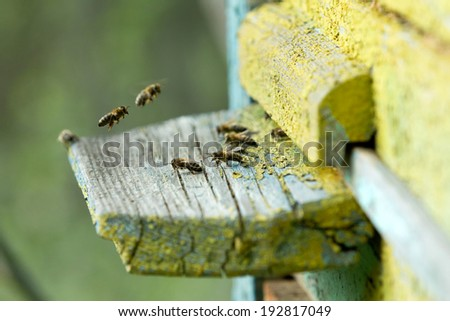 Swarm of bees in front of a bee-house - stock photo