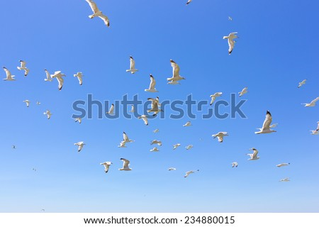 swarm of sea gulls flying close to the beach of an island,Greece - stock photo