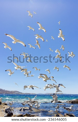 swarm of sea gulls flying close to the beach of mykonos island,Greece