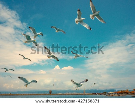 Swarm of seagulls flying close to the island of Nessebar, Bulgaria. - stock photo