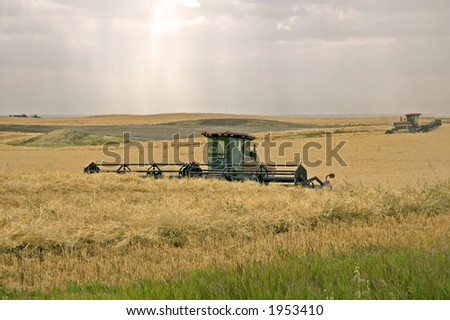 Swathing crops, such as wheat or barley. - stock photo