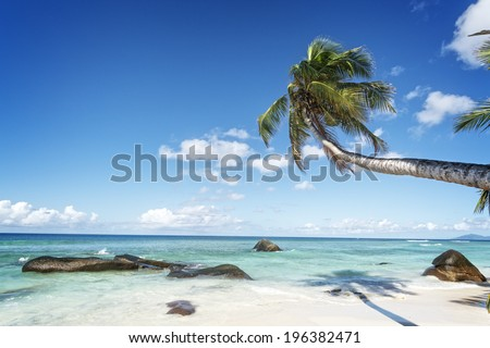 swaying palm tree on the white sand tropical beach of Silhouette island, Seychelles, Africa - stock photo