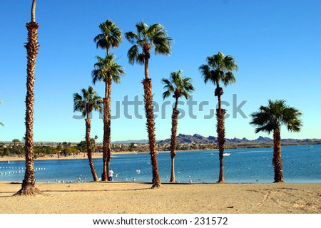 SWAYING PALM TREES IN BEAUTIFUL LAKE HAVASU. - stock photo