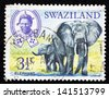 SWAZILAND - CIRCA 1969: A Stamp printed in Swaziland shows African Elephant, circa 1969 - stock photo