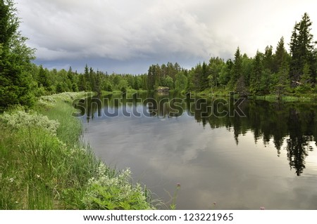 Swedish natural salmon area in summer