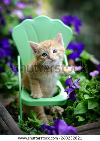 Sweet adorable homeless baby pet orange tabby kitten sits in vintage style metal garden chair surrounded by  purple flowers and plants placed  in an old vintage planter. - stock photo