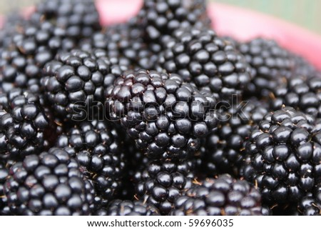 sweet and fresh blackberries in a bowl