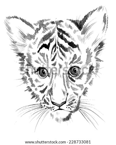 sweet baby tiger portrait in watercolor drawing isolated on white. - stock photo