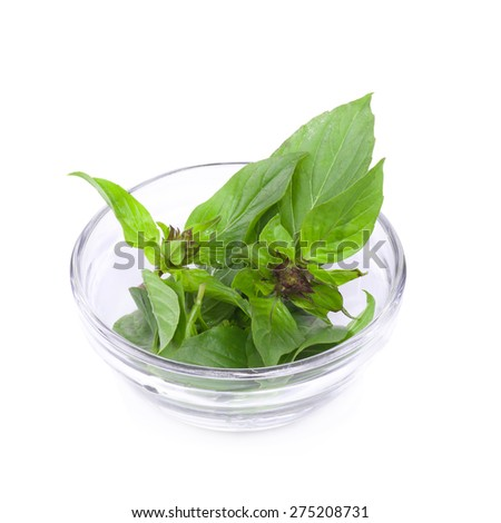 Sweet Basil isolated on a white background