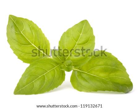 Sweet basil leaves isolated on white background - stock photo