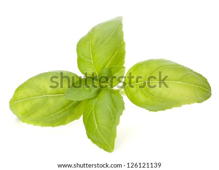 evaluation of the sweet basil