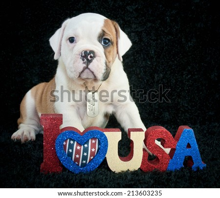 Sweet Bulldog puppy wearing dog tags sitting with an I love U.S.A. sign, with copy space on a black background. - stock photo