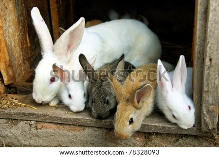sweet bunny rabbits family - stock photo