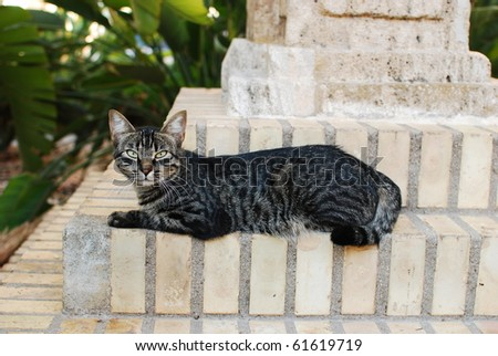 Sweet cat alley stare - stock photo