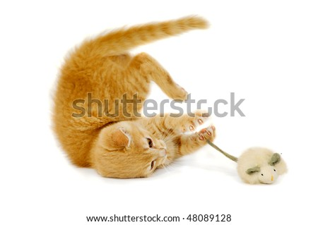 Sweet cat kitten is playing wity toy mouse - stock photo