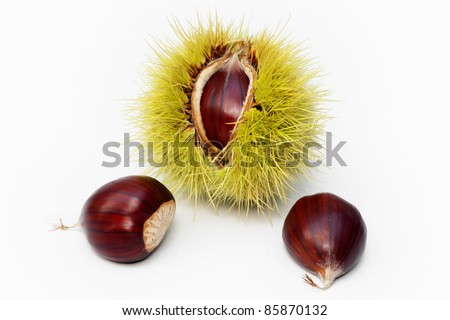 sweet chestnut fruit half open and nuts on white background - stock photo