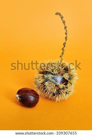 sweet chestnut fruit with seeds on orange background - stock photo