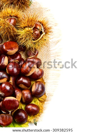 Sweet chestnut on white background.  - stock photo