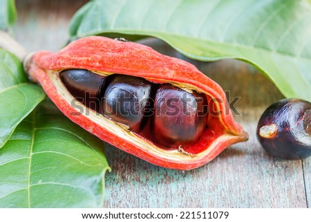 Sweet chestnuts on wooden background. (Sterculia monosperma) - stock photo