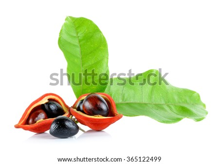 sweet chestnuts (Sterculia monosperma) on white background. - stock photo