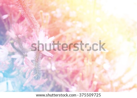 sweet color blur flower, digital effect abstract for background